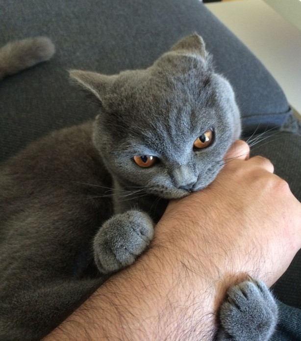 10 Situations That Only Cat Owners Can Fully Understand