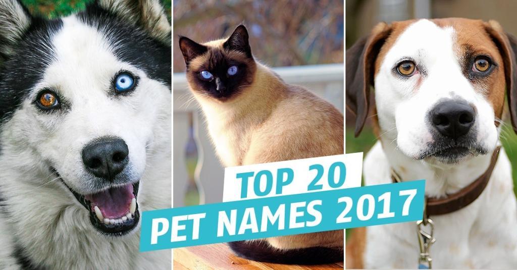 Popular Pet Names For 2017