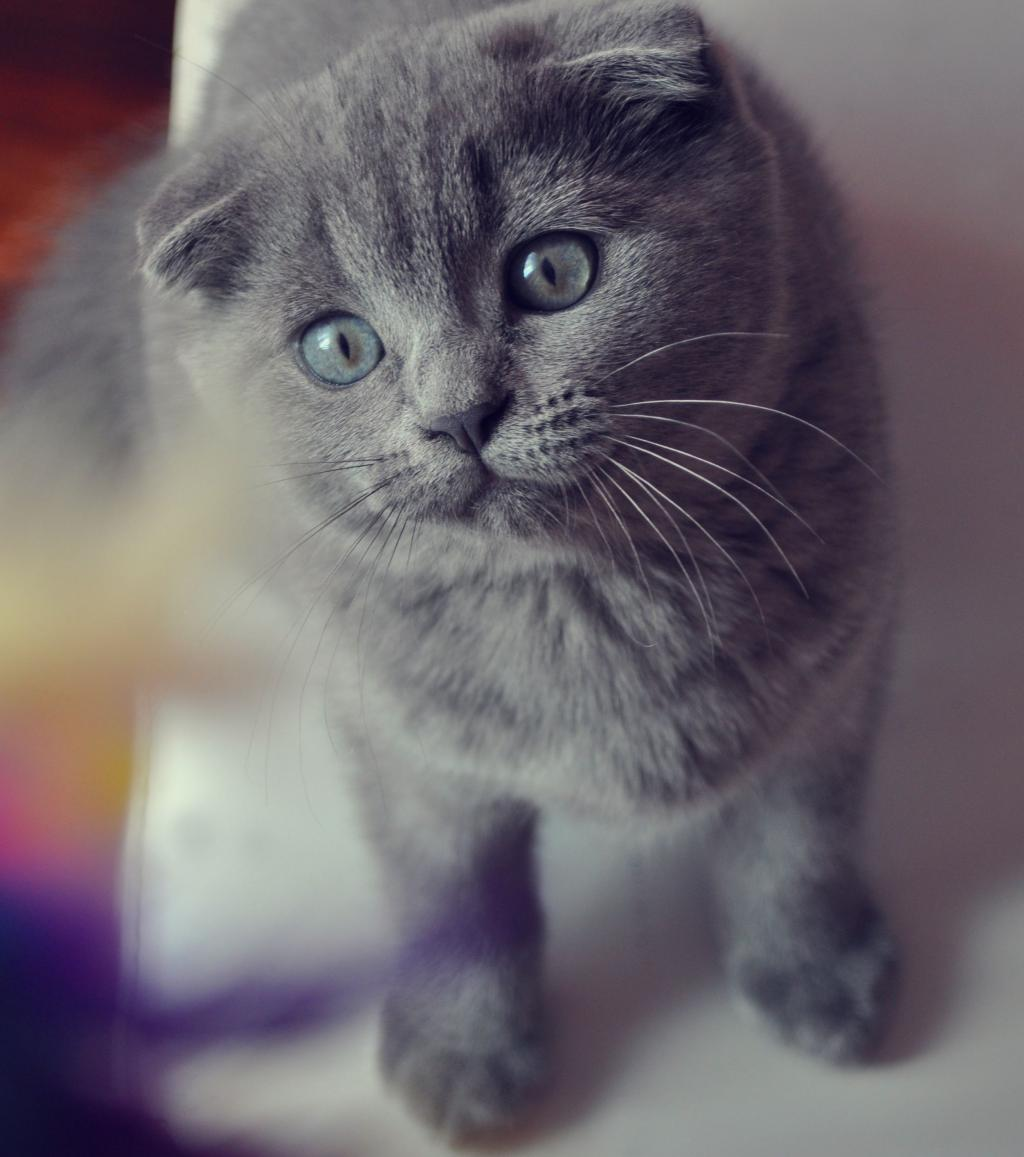 Is Your Cat One Of The Most Beautiful Breeds In The World?