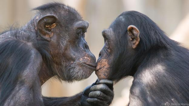 Love Isn't Just For Humans, These Animals Can Prove It!