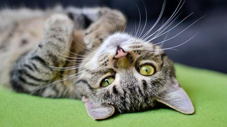 It's Been Proven: If Your Cat Doesn't Respond, There's A Good Reason!