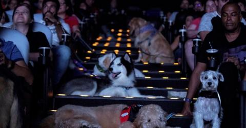 A Cinema In São Paolo Had A Special Screening For Dogs
