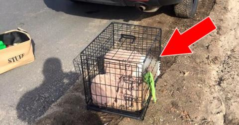 They Found This Poor Animal Abandoned And Locked In A Cage