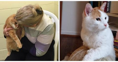 Just Hours After Adopting Her Cat, This Woman Was Forced To Rush Back To The Shelter