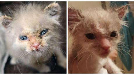 She Was Covered In Scabs When They Found Her - Weeks Later Her Transformation Is Unbelievable