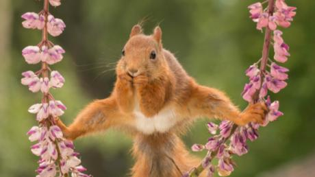 These Hilarious Animal Photos Were Taken At Just The Right Time