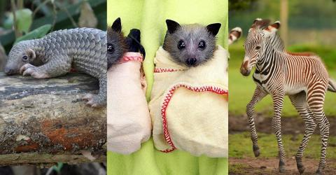 Top 10 Animals Whose Babies Are Even Cuter
