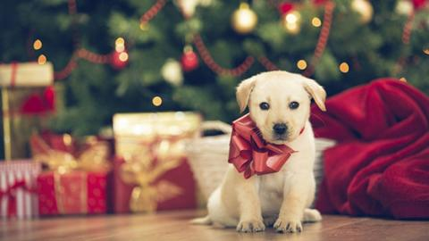 10 Original And Thoughtful Christmas Present Ideas For Animal Lovers