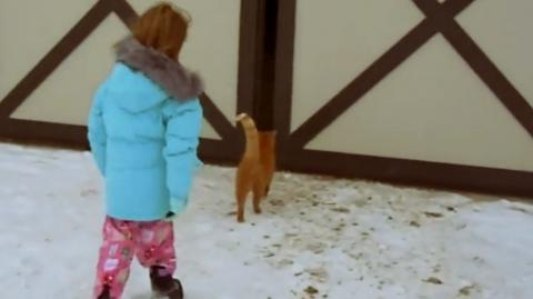 This Little Girl Followed Her Cat Into The Barn And What She Saw Inside Left Her Speechless
