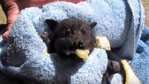 If You're Not A Fan Of Bats, This Video Will Most Definitely Change Your Mind
