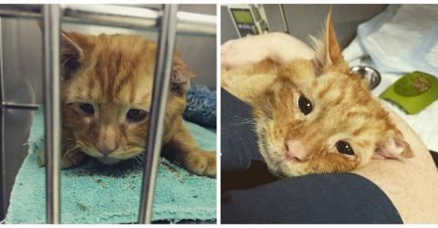 A Horrible Accident Left This Cat With A Crushed Back But His Story Wasn't Over