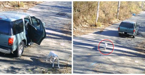 This Man Was Caught On Camera Abandoning His Poor Dog Saw The Justice He Deserved