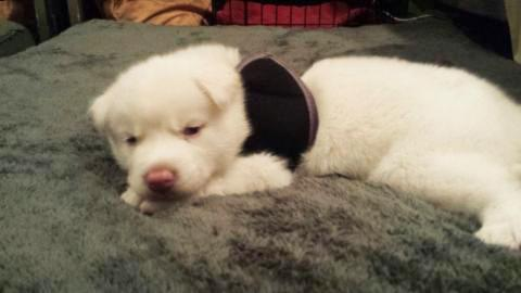 This Adorable Puppy Was Scheduled To Be Put Down By His Owner But His Story Wasn't Over...