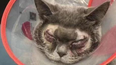 She Forced Her Cat To Have Plastic Surgery Because He Was 'Too Ugly'