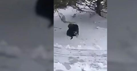 Watch This Dog Save A Cat That Was Freezing In The Snow