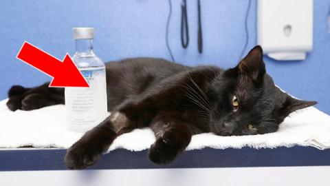 They Thought This Cat Would Die After Swallowing Antifreeze - But The Vet Had An Incredible Idea To Cure Her