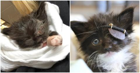 This Poor Kitten's Life Is In Danger Thanks To An Eye Infection