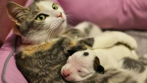 This Cat's Entire Litter Were Stillborn, But Her Canine Friend Did Something Amazing
