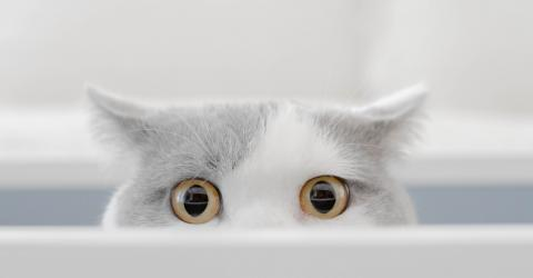 When This Cat's Owner Showed Her An Optical Illusion, She Had The Funniest Reaction