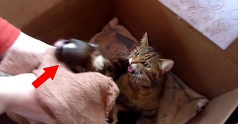 This Was The Moment A Mama Cat Took A Newborn Puppy Under Her Wing Along With Her Kittens