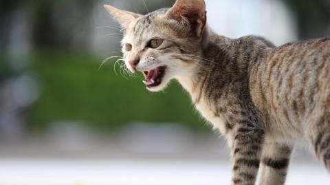 This Is The Real Reason Your Cat Meows When It Enters And Leaves A Room
