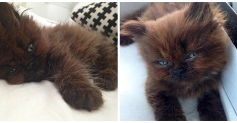One Year After This Little Kitten Was Adopted, She Looks Totally Unrecognisable