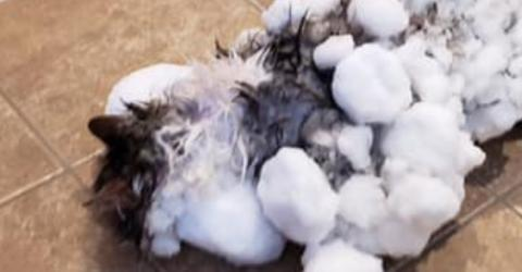 They Found This Cat Totally Frozen, What Happened Next Was Magical