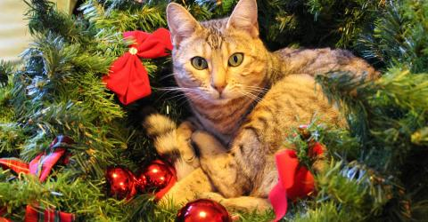 This Is The Real Reason Your Cat Insists On Destroying Your Christmas Tree
