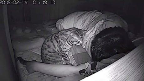 He Filmed What His Cat Did At Night, He Will Never Look At His Feline Friend The Same Way Again