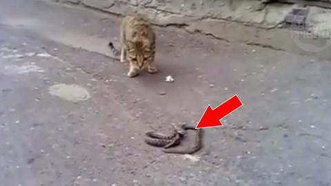 This Cat Came Across A Snake In The Road... No One Expected What Happened Next