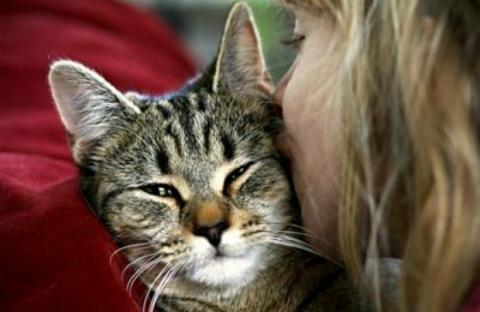 This Is How You Can Tell If Your Cat Really Loves You Or Not