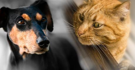 A Scientific Study Has Finally Confirmed Whether Cats Or Dogs Are More Intelligent