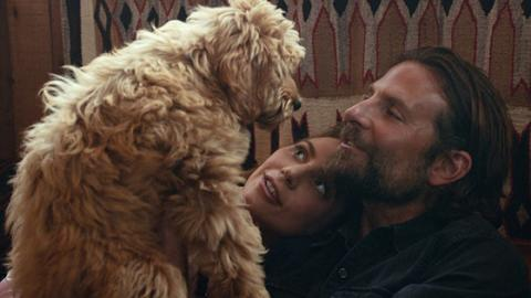 Bradley Cooper Will Soon Be Receiving An Award From PETA For A Very Special Reason
