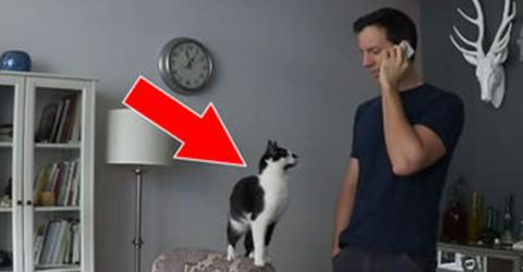 What Does This Cat Do While His Owner Is On The Phone?