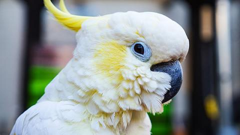 This Chatty Cockatoo Managed To Stop A Shameless Criminal