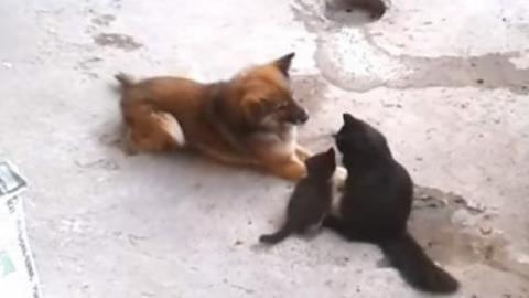 This Dog Met A Litter Of Kittens For The First Time But No One Expected This Reaction