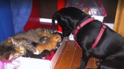 As A Mother Cat Gives Gives Birth, This Dog Responds In The Most Heartfelt Way