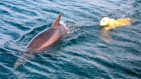 This Dog And Dolphin Have The Most Beautiful Friendship