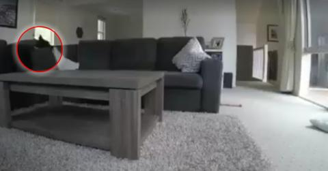 She Installed A Camera To Monitor Her Adorable Dog And Got A Bit Of A Surprise