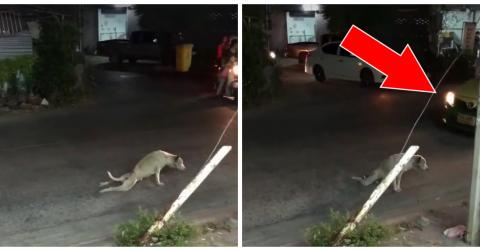 This Dog Seems To Be Paralysed In The Street But No One Will Help Him