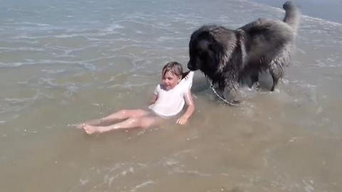 When This Dog Saw His Friend's Life Was At Risk, He Didn't Hesitate To Act