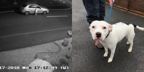 Heart-Wrenching Moment Owner Leaves Pet Dog On Road Side Before Driving Off