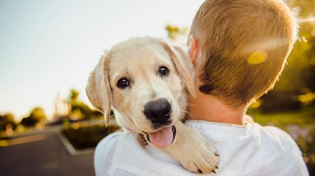 This Study Proves That Losing A Dog Can Be As Painful As Losing A Relative