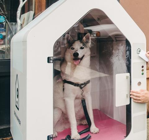 In New York, People Are Leaving Their Dogs In Boxes In The Streets