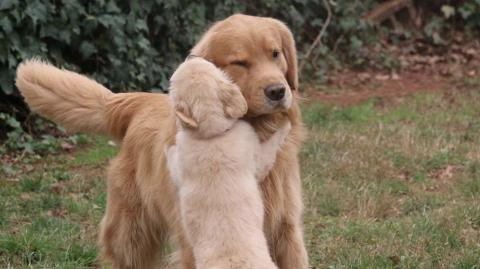 5 Ways That Your Dog Shows You How Much They Love You
