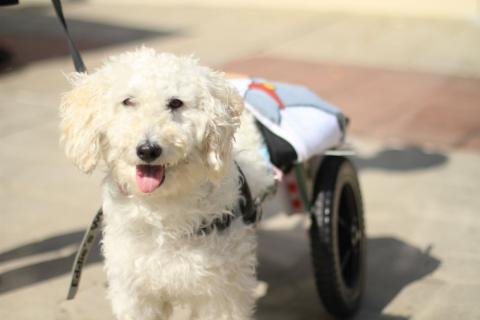 Thanks To This Family, Disabled Dogs All Over Europe Can Lead A Happier Life