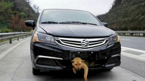 This Man Drove Over 200 Miles With A Dog In His Bumper After Hitting It On A Motorway