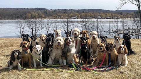 These 28 Dogs All Get Taken For A Walk Together Every Day And It's The Best Thing We've Seen All Year