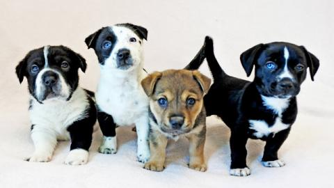 One Of These Puppies Has A Very Unusual Feature... But Can You Tell Which One?