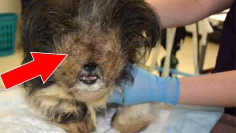 After Years Of Suffering, This Dog Finally Found Salvation